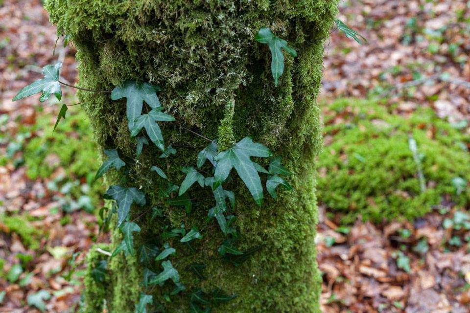 Esus et Airmid - Monde végétal