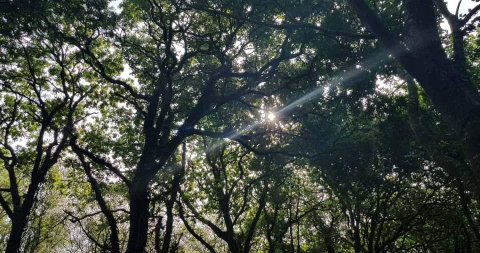 soleil fête de Rosmerta