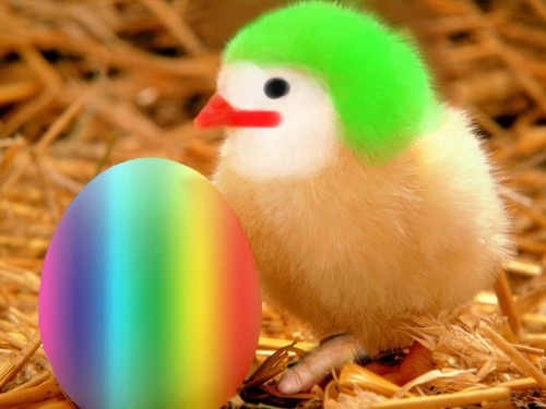 crazy easter chick 500x375 crazy easter chick