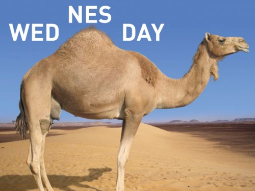 wed nes day 500x375 wed nes day
