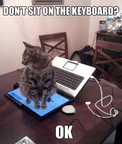 do not sit on the keyboard ok 423x500 do not sit on the keyboard ok