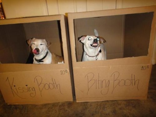 dog booths 500x375 dog booths