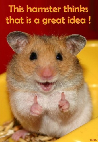 this hamster thinks that is a great idea 344x500 this hamster thinks that is a great idea