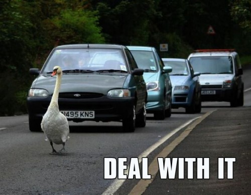 goose traffic deal with it 500x390 goose traffic   deal with it