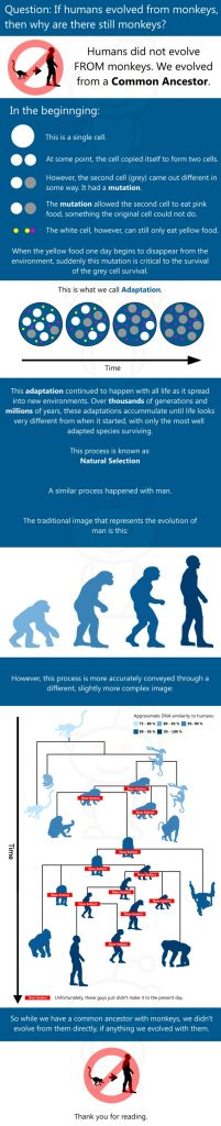 If humans evolved from monkeys why are there still monkeys 201x1024 If humans evolved from monkeys, why are there still monkeys