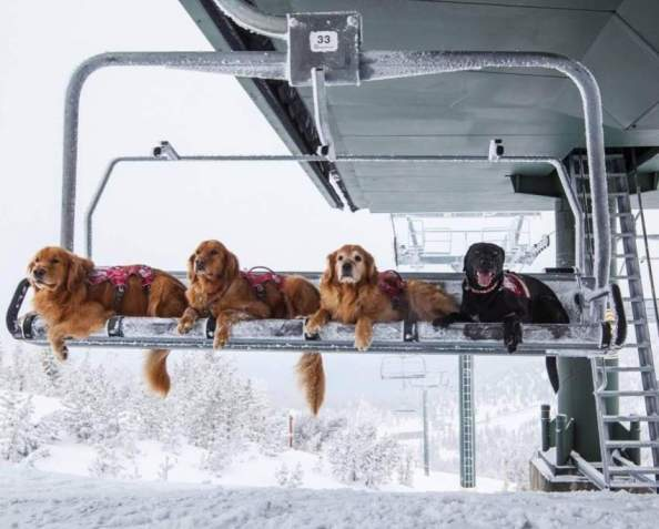 snow lift dogs snow lift dogs