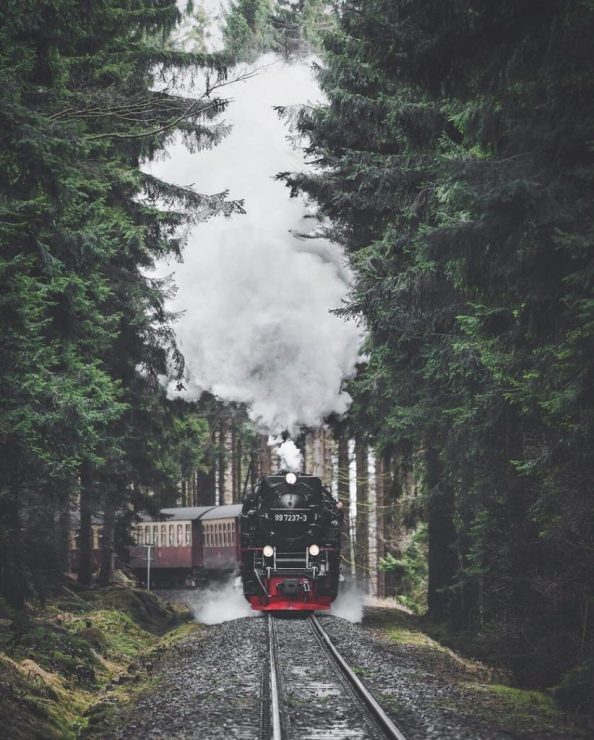 forest train 822x1024 forest train