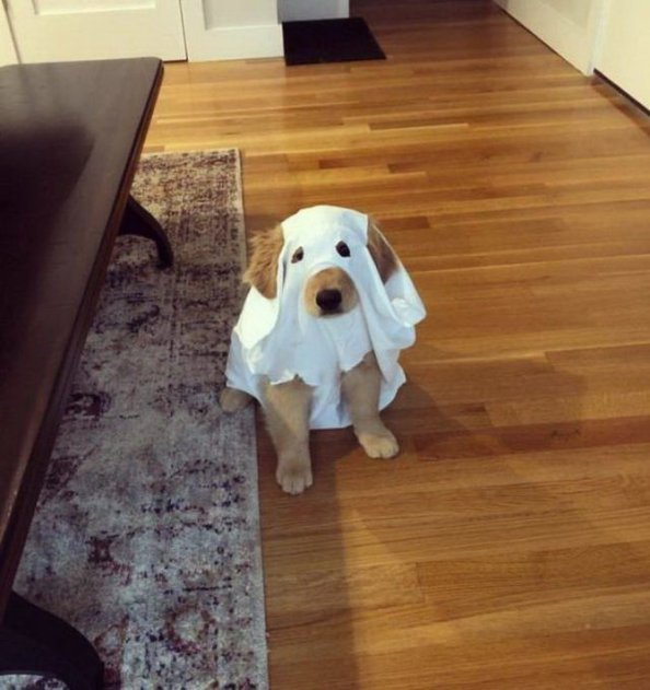 spooky ghost dog