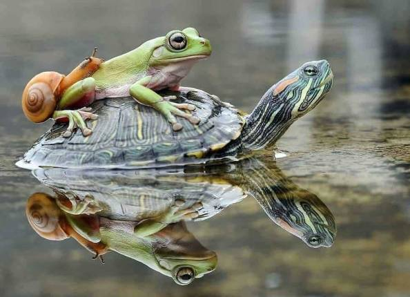 snail riding a frog riding a turtle snail riding a frog riding a turtle