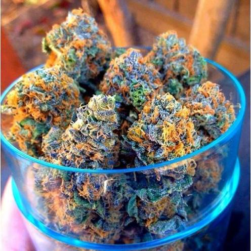 BOWL OF BUDS