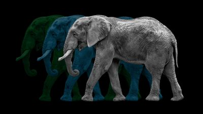Trio-of-grey-blue-green-Jordanesque-fullsize-elephants-1920x1080.jpg