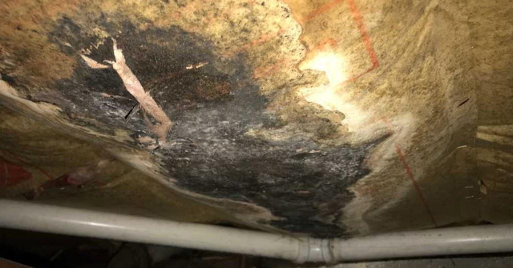 moldy wet insulation