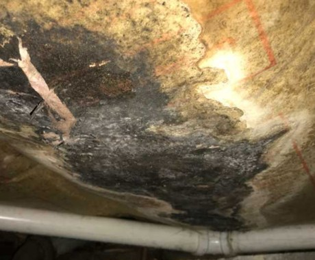 Basement Waterproofing for Preventing Mold Growth
