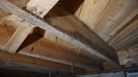 mold in crawl space on wooden beams