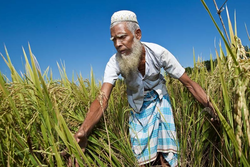 Rice price formation in Bangladesh: an investigation.