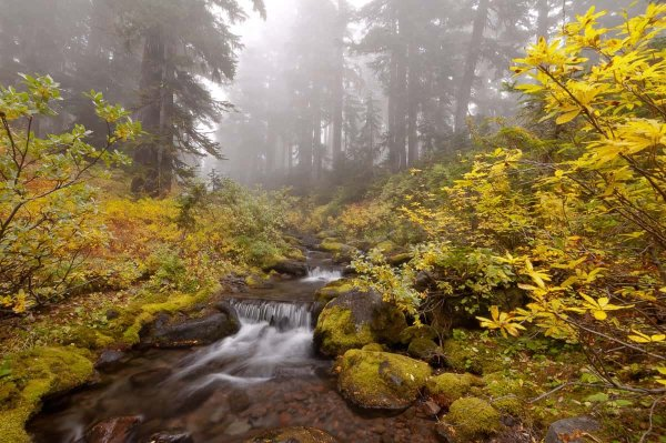Autumn in Willamette National Forest