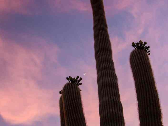 Lone Desert Giant