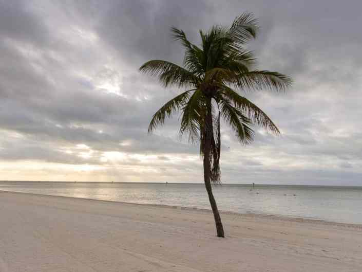 Lonely Palm on Smathers Beach