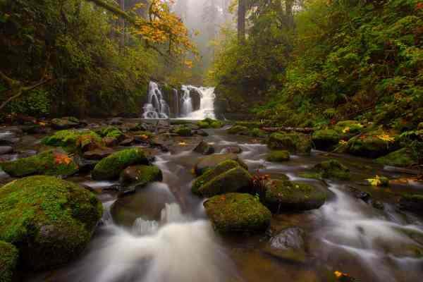 McDowell Creek in Autumn