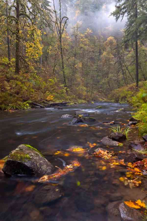 Misty Silver Creek