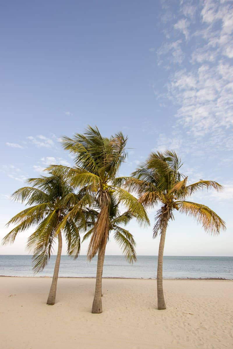 Palms on Key Biscayne