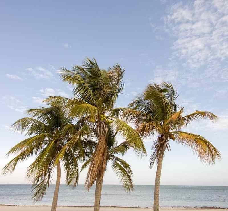 Palms on Key Biscayne