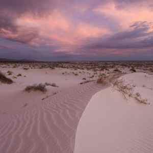 Texan Desert