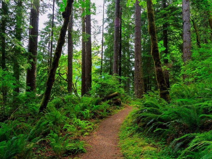 The Trail to Loon Lake Falls