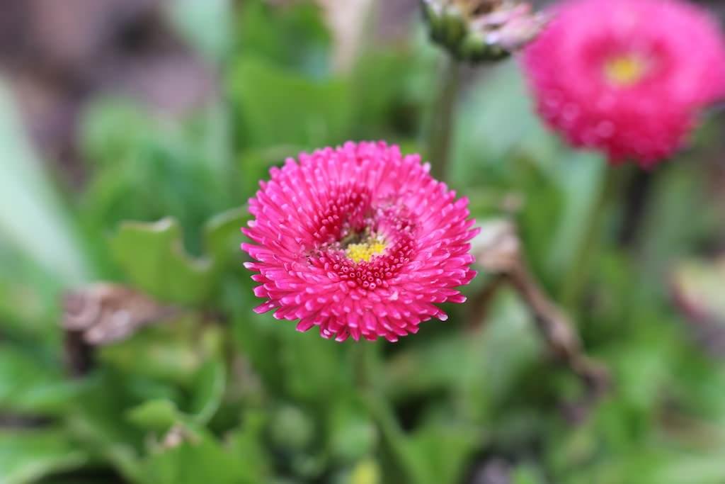 photo de fleur Macro