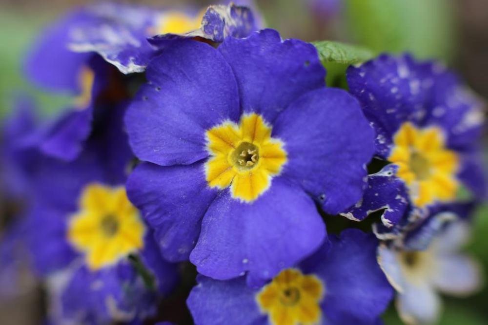photo de fleur violette avec tube allonge