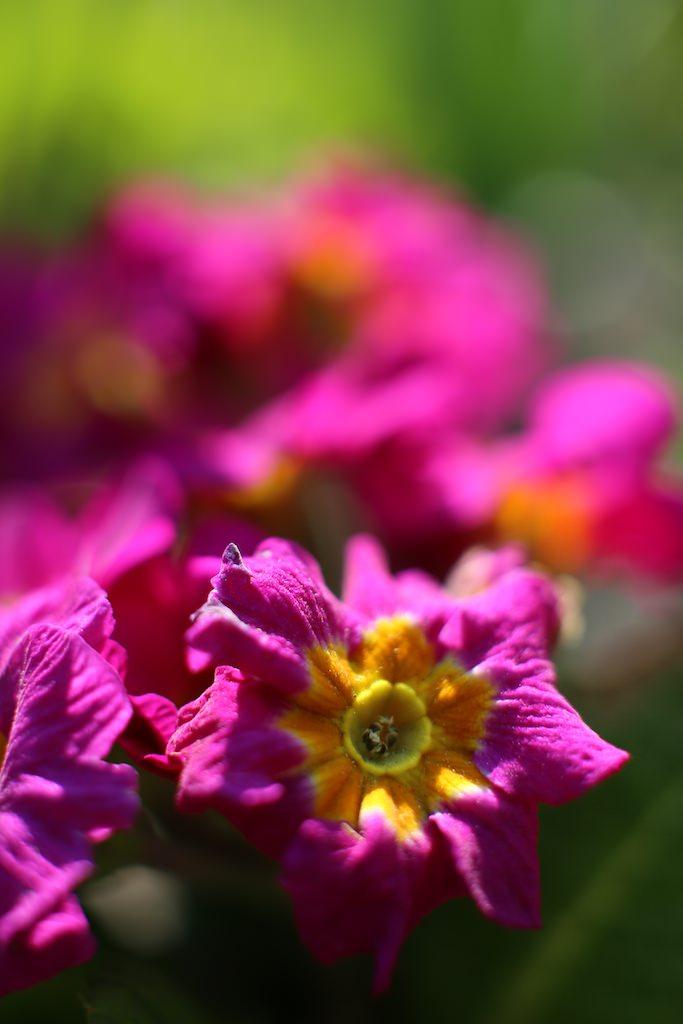 #03 Photo Macro de fleur