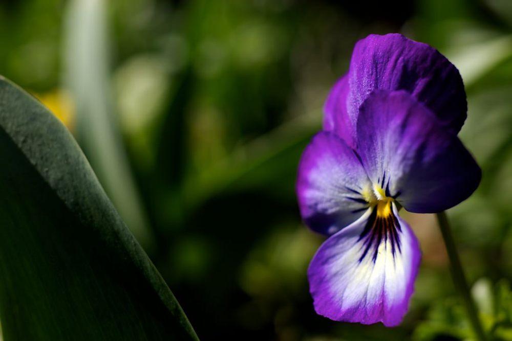 Photo Macro de fleur