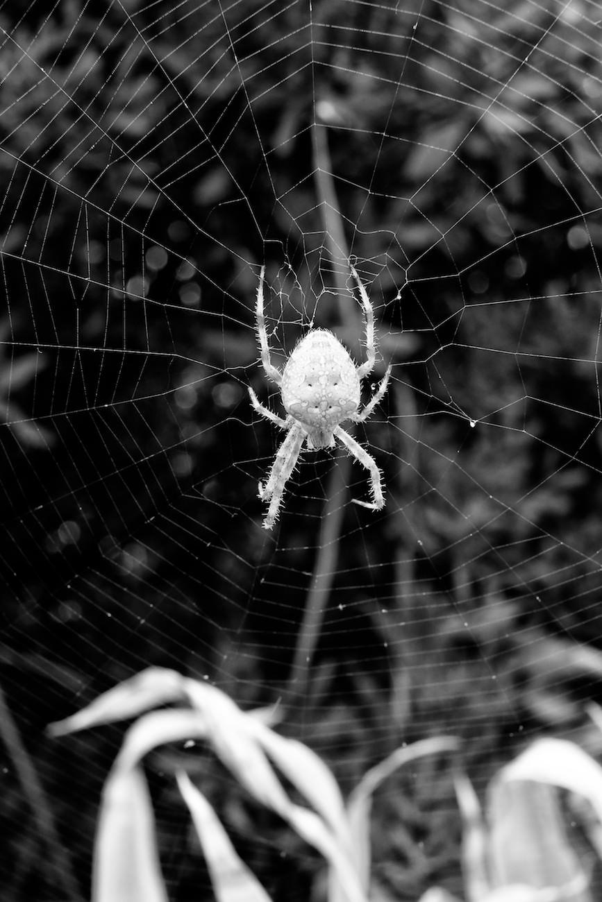 #04 L'araignée v2