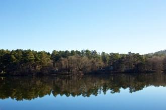 Reflet des arbres sur l'eau