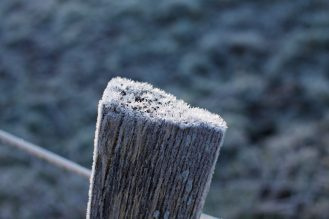 Poteau en bois gelé