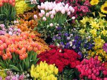 Feira de Flores Holambra parte do aniversário de Conquista