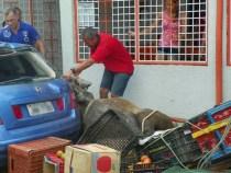 Cavalo causa acidente na Feririnha