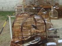 Polícia recolhe centenas de pássaros mantidos em cativeiro