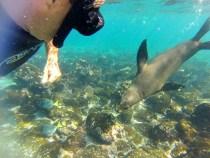 As ilhas encantadas de Galápagos