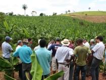 Senado aprova renegociação de dívidas de produtores rurais