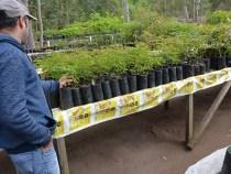 Herbário Municipal auxilia no reflorestamento da Serra do Periperi
