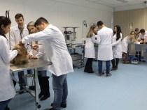 FTC Conquista seleciona professores para o curso de Medicina Veterinária