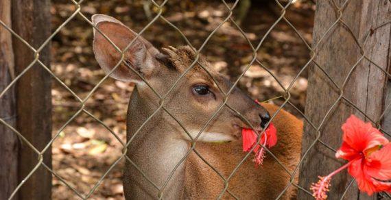 CETAS de Vitória da Conquista já atendeu mais de 60 mil animais silvestres