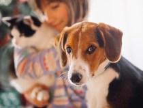 Iniciada a Campanha de Vacinação antirrábica para cães e gatos
