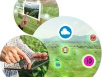 Parceria entre Sebrae e Embrapa leva inovação e gestão aos pequenos negócios