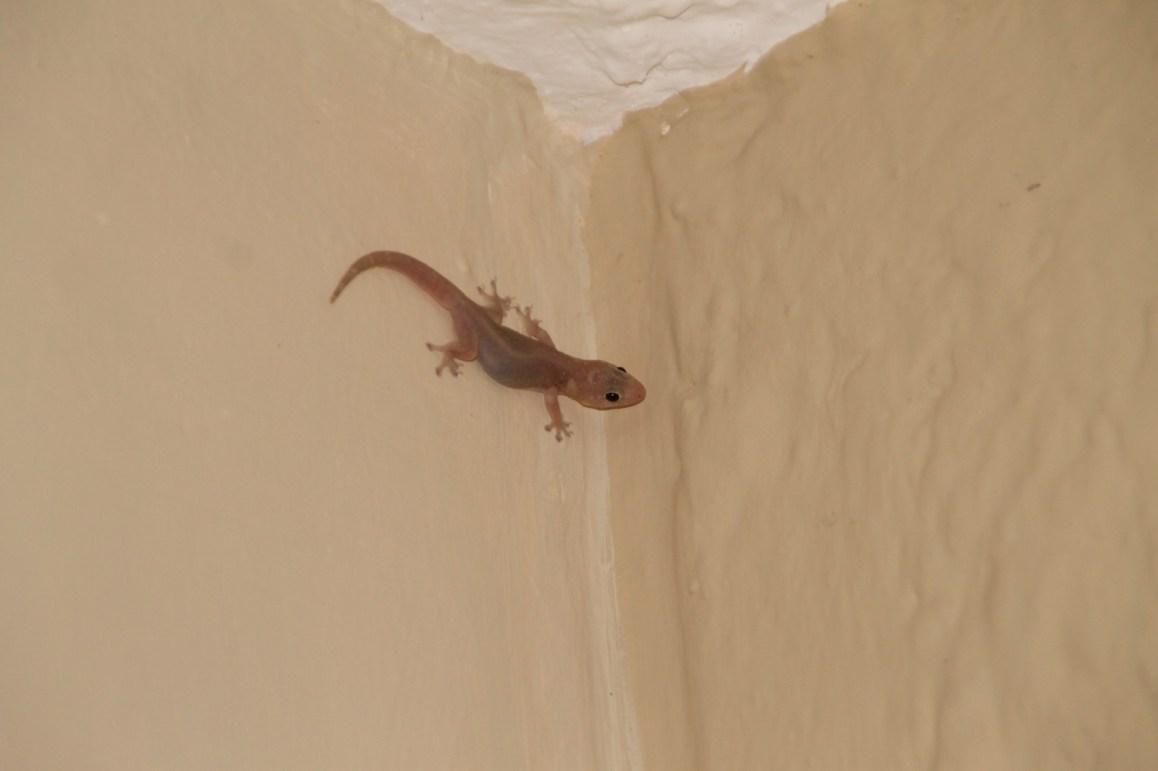 Nächtlicher Besuch auf unserem Balkon