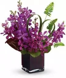 20 purple mokara orchids as royal gift