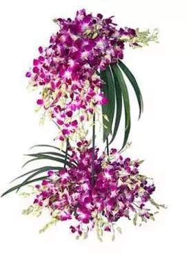 60 purple orchids stand delivery in Dubai