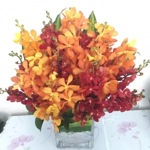 Red orange orchids in Dubai