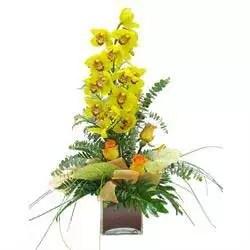 orchid cymbidium yellow